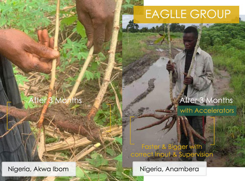 eaglle group